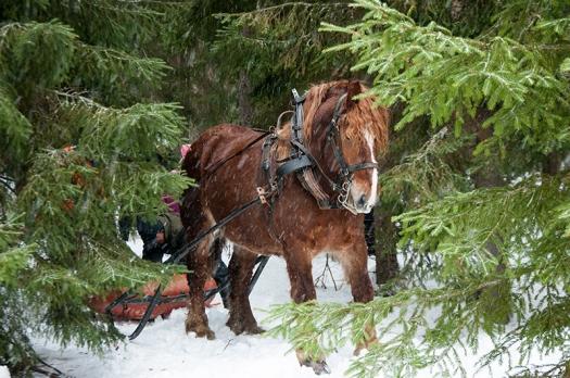 Hästjobb