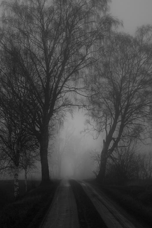 allé i dimma