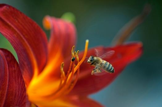 blomman och flugan