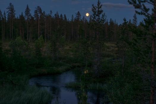 månsken